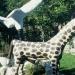 girafe.3