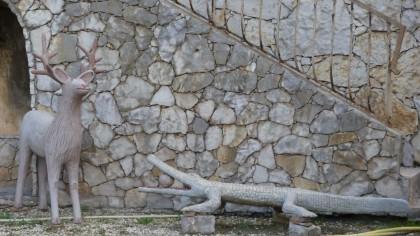 cerf crocodile.jpg