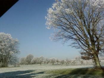 gelée blanche 3.jpg