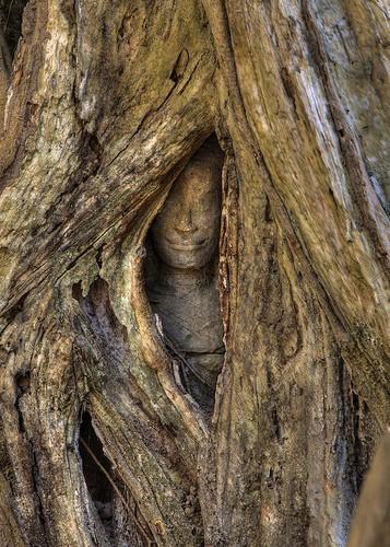 statue arbre.jpg