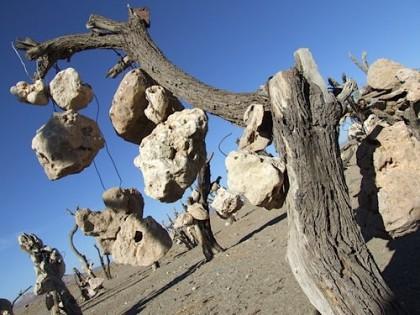 jardin de pierres un arbre.jpg