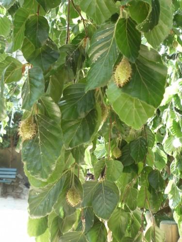 feuilles et fruits.jpg