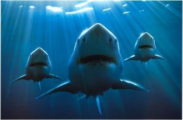 3 requins.jpg