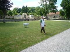 mouton auberive.JPG