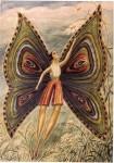 Ovartaci papillon.jpg