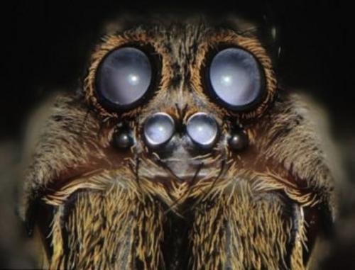 araignée gros plan.jpg