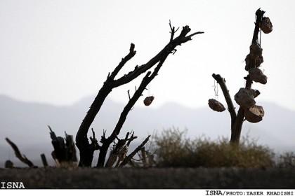 Jardin de pierres dans la brume ISNA.jpg